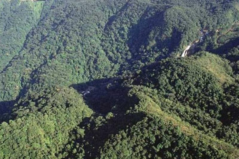 Piauí mantém índice inaceitável de desmatamento da Mata Atlântica