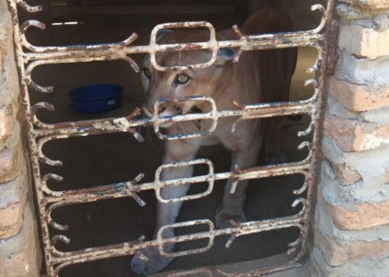 Animais vítimas de maus-tratos serão levados para o zoobotânico