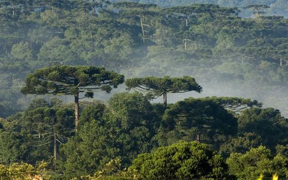 Governo de Bolsonaro quer reduzir 60 florestas e reservas