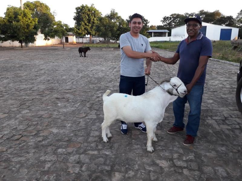 Prefeitura beneficia produtores de caprinos com melhoramento genético