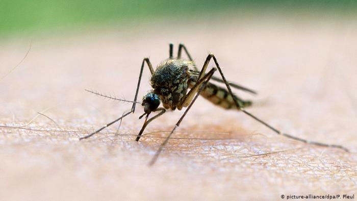 Secretaria de Saúde afirma que surto de malária está controlado no PI