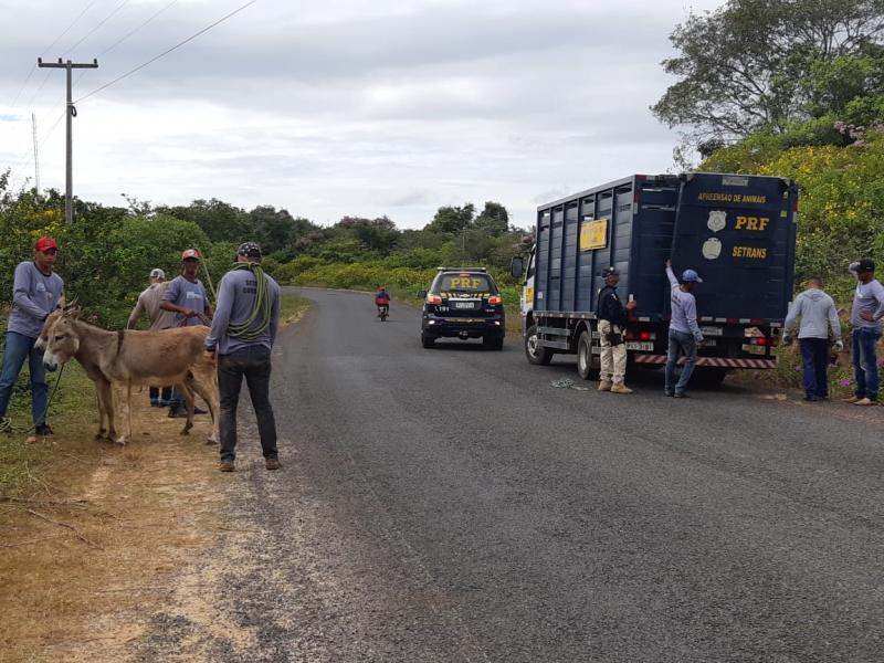 PRF realiza mais uma fase da operação de apreensão de animais