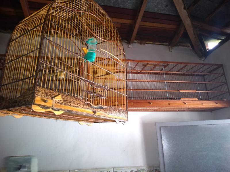 PM apreende pássaros silvestres em cativeiro em Teresina