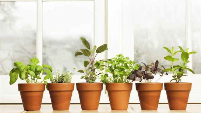 4 problemas comuns de saúde que você pode aliviar com plantas
