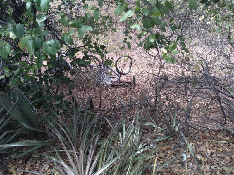 Ciclista morre após cair em aterro na BR-407