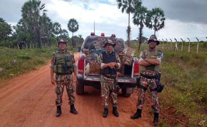 Polícia Ambiental apreendeu 30 pássaros silvestres