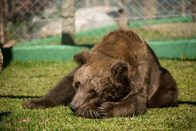 Ursa Marcha morre em decorrência de tumor no ovário