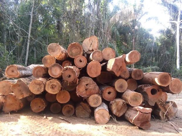 Semar identifica área de extração ilegal de madeira no PI