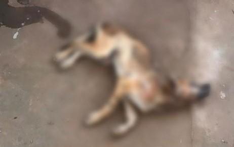 Cães são encontrados estrangulados no Piauí
