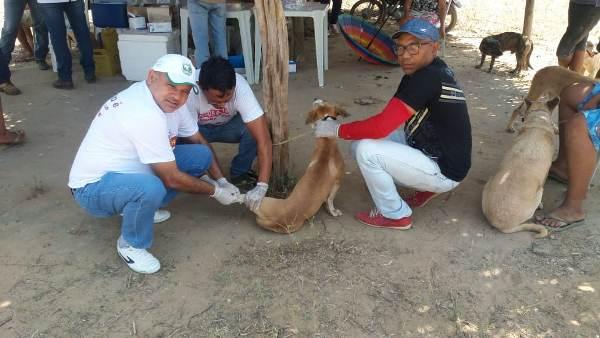 Teste rápido de calazar em cães na Comunidade Aliança do Gurgueia
