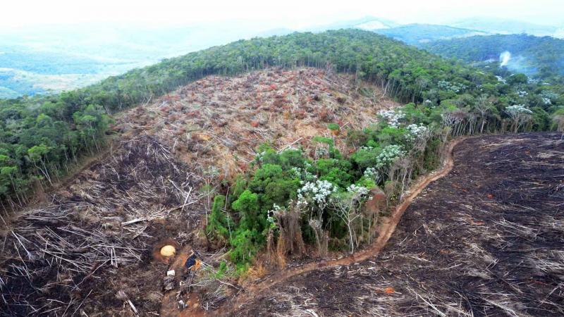 Moro envia Força Nacional para combater desmatamento