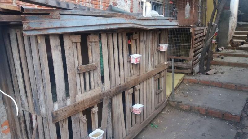 Polícia desarticula rinha de galos e prende proprietário em Teresina