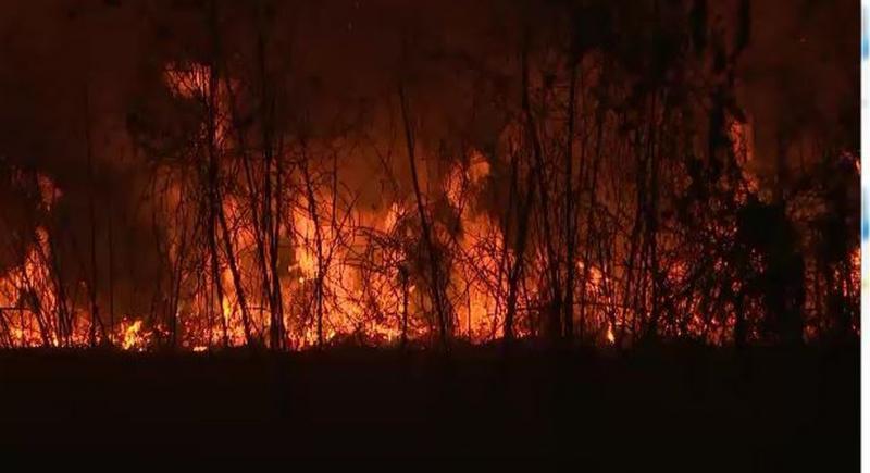 Palestina oferece ajuda ao Brasil para combater queimadas