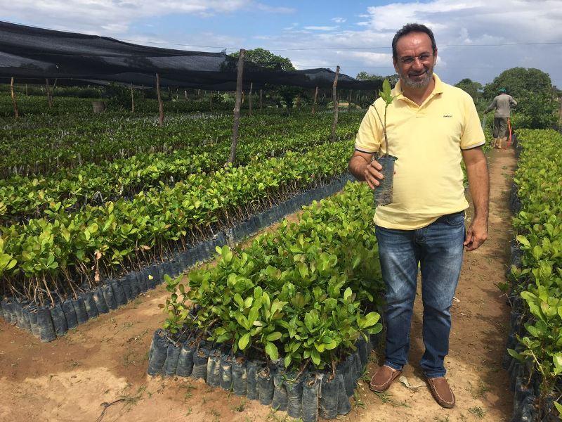 Gestão incentiva a produção do Caju; 60 mil mudas já foram dist