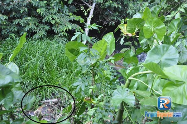 Corpo é encontrado em estado avançado de decomposição no Piauí