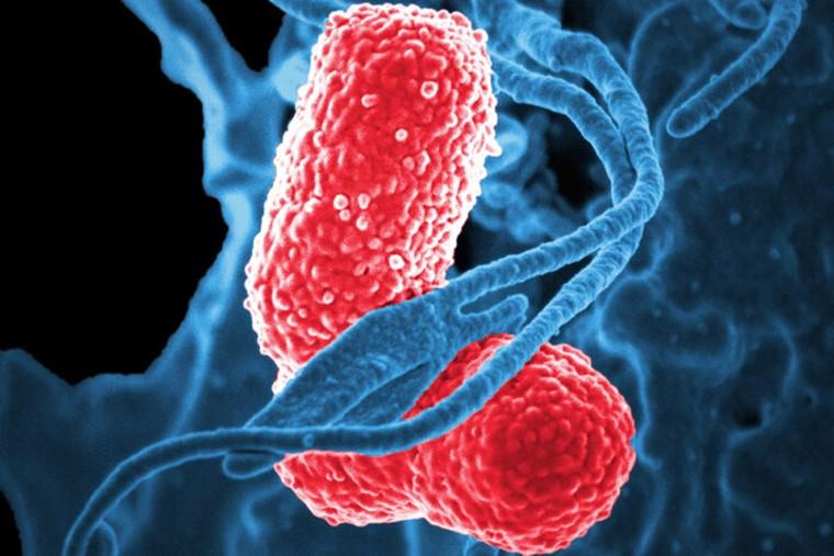 Vacina contra superbactéria é desenvolvida nos Estados Unidos