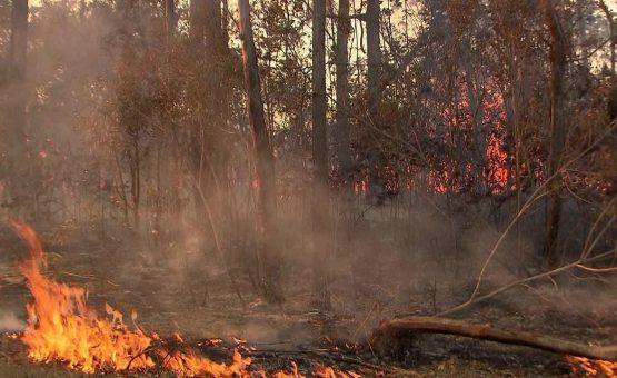 Cerrado registra mais focos que a Amazônia no início de setembro