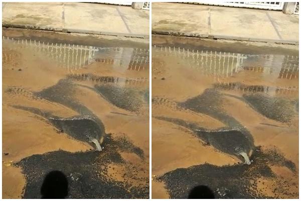 Moradores do Parque Piauí denunciam vazamento em cano