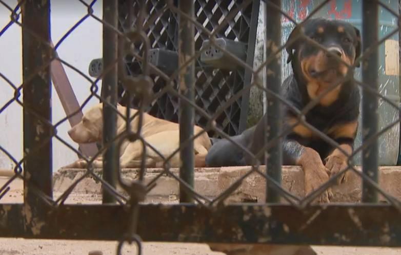 Criança de 2 anos morre após ser atacada por cães enquanto dormia