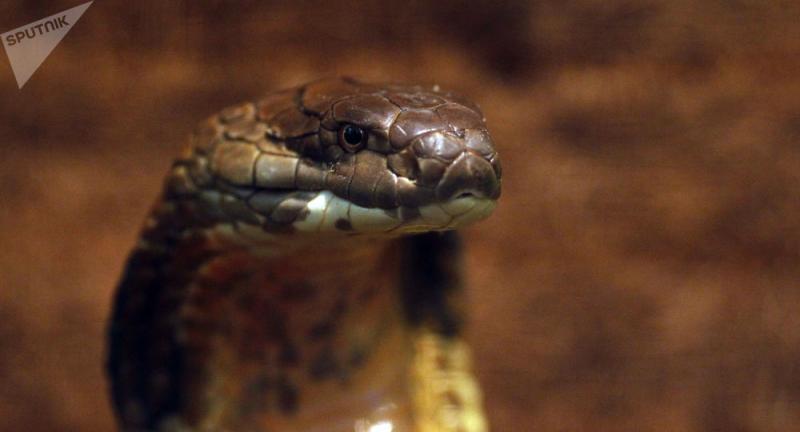Mulher senta acidentalmente em cobras e morre envenenada