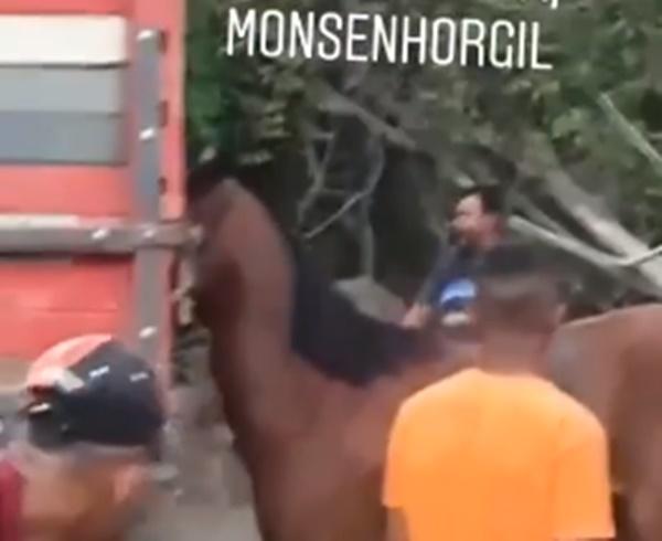 Vídeo mostra homem batendo em cavalo no Piauí