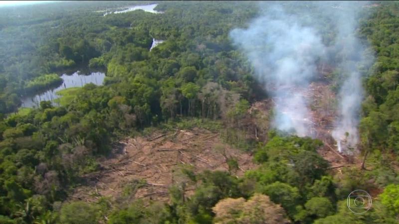 Impunidade incentiva o desmatamento no Brasil, diz estudo