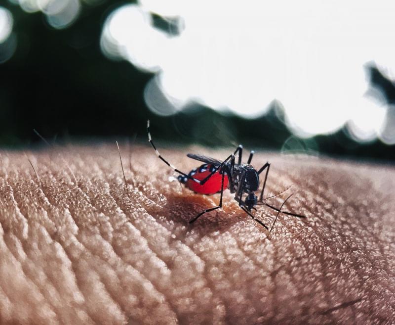 Piauí registra quatro vezes mais casos de dengue em 2019