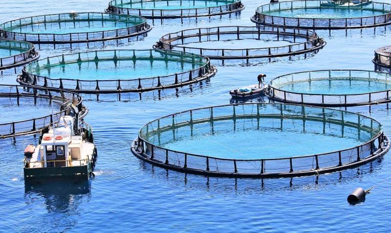 Codevasf promove encontro da cadeia produtiva da aquicultura no norte do PI