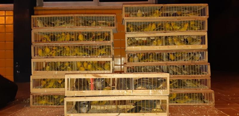 Homem é preso por tráfico de animais silvestres na BR 316