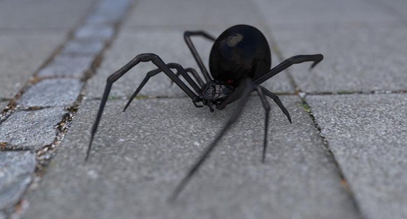 Aranhas invadem casa e picam homem até ele não poder andar