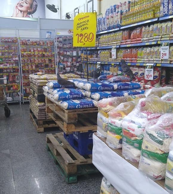 Pombos são flagrados defecando sobre alimentos em mercado