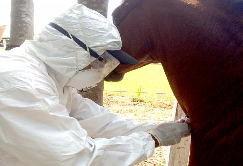 Sétimo caso da doença de mormo é confirmado no interior do Piauí