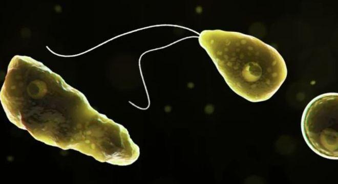 Ameba encontrada em água doce pode levar à morte em poucos dias
