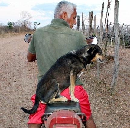 Cachorro faz sucesso ao ser filmado andando de moto