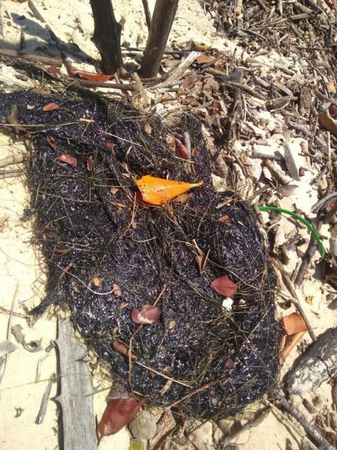 Manchas de óleo aumentam nas praias do Piauí, diz Ibama