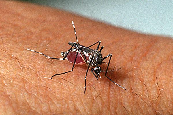 Teresina tem baixo risco de infestação do mosquito da dengue