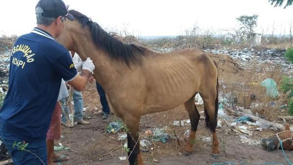 Técnicos da ADAPI sacrificam animais doentes em Colônia do Gurgueia
