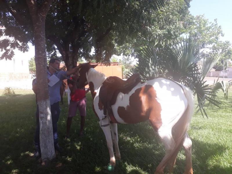 Por determinação do Ministério Público Secretaria inicia exames em Equinos