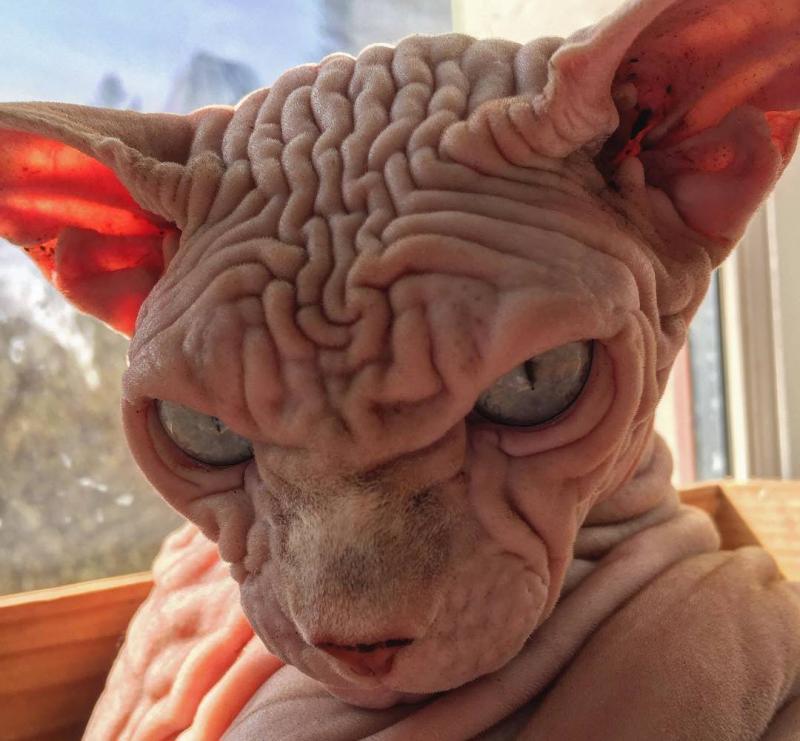 Confira os animais mais feios do mundo; um deles vai te surpreender
