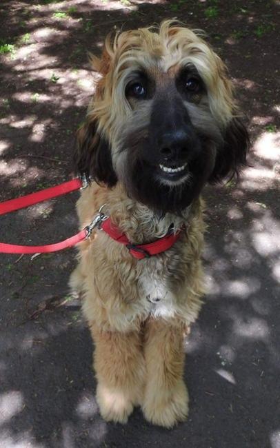 Cão com rosto humano choca internautas e faz sucesso na web