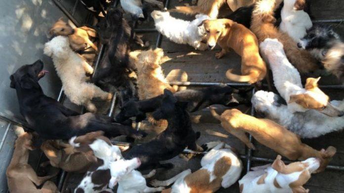 Família é presa por usar carne de cachorro para fazer linguiça