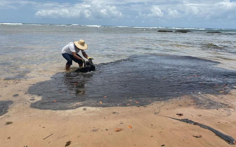 Manchas de óleo voltaram em 3 de cada 10 locais que foram limpos