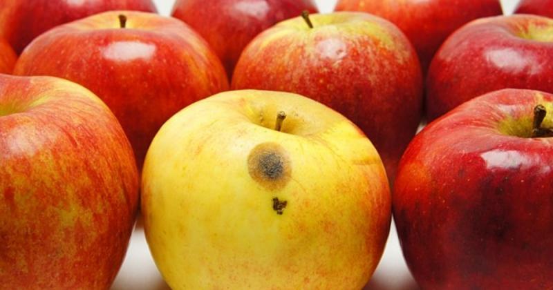 Não coma fruta parcialmente podre, alerta OMS