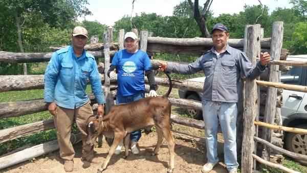 Vacinação contra brucelose na Comunidade Lagoa Cercada