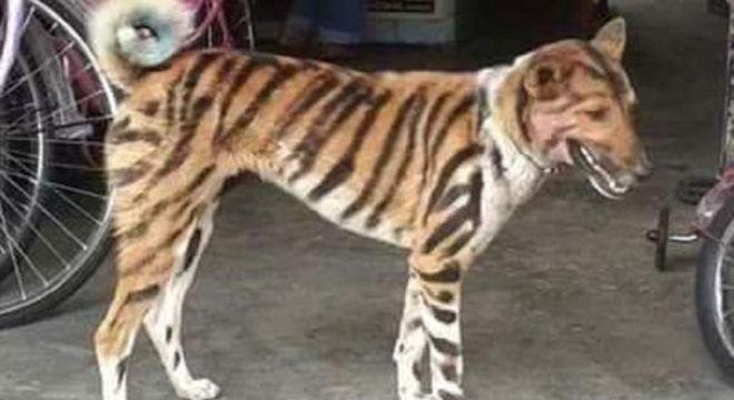 Agricultor transforma cão em tigre para afugentar macacos