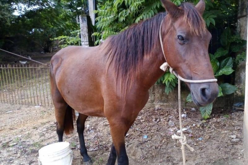 Idoso é preso após ser flagrado fazendo sexo com égua