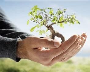 Projeto adote uma árvore é aprovado por unanimidade em Barra D'Alcântara