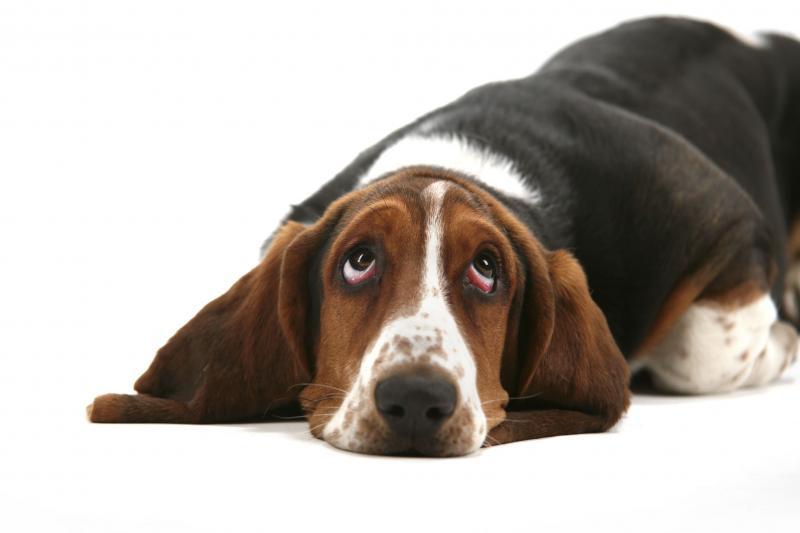 A expressão facial dos cães e como ela nos conquista