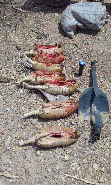 Polícia Militar apreende 07 Tatus provenientes da caça nas proximidades da Serra da Capivara