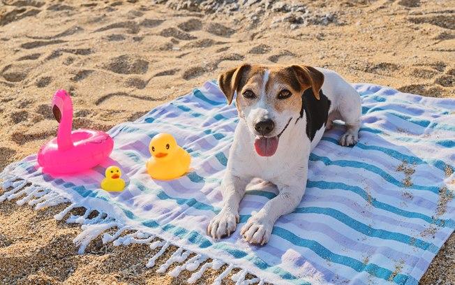 Protetor solar para cães é muito importante; saiba tudo sobre